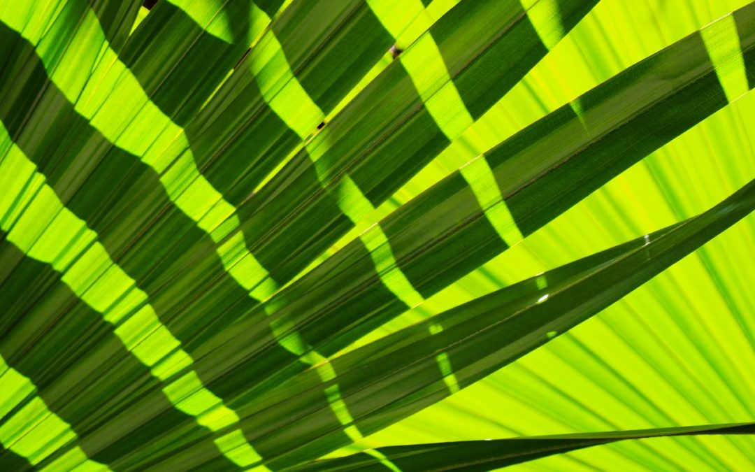 Palm Sunday (A Poem and a Prelude)