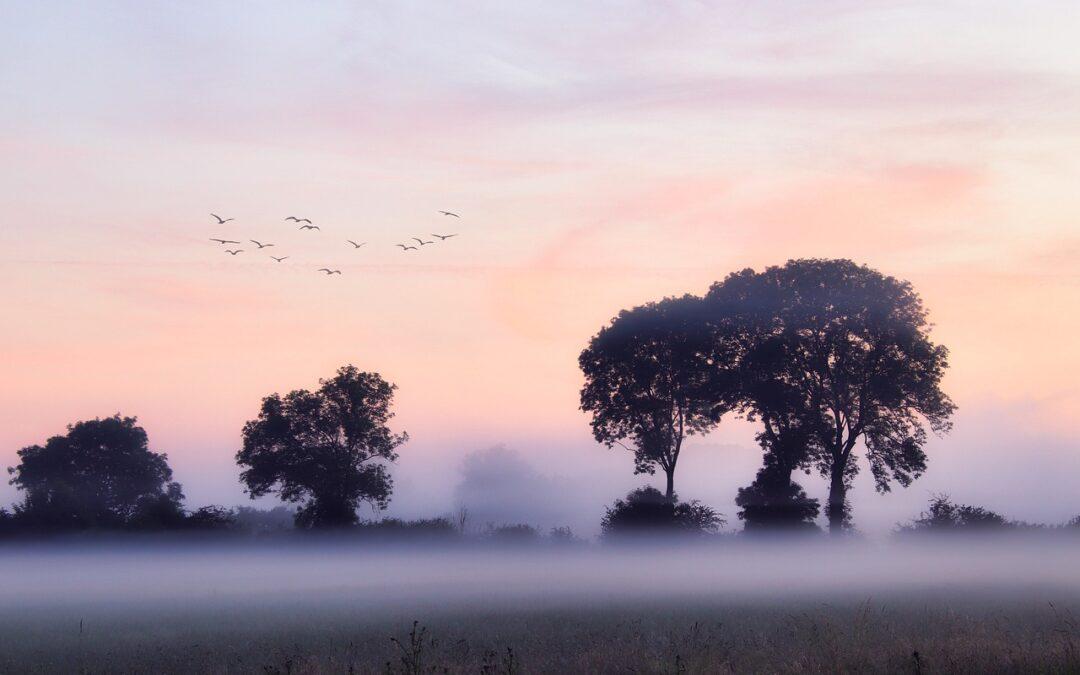 Morning Prayer: Your great faithfulness